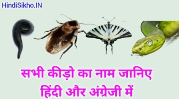 Insects Name in Hindi and English