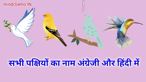All Birds Name Hindi and English